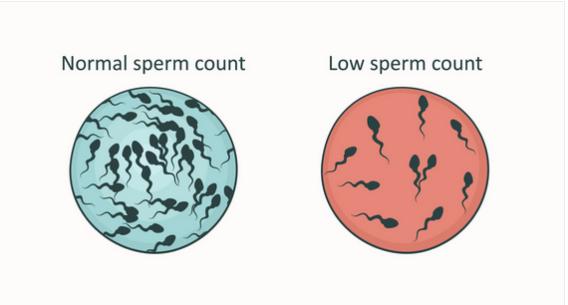 improve-sperm-count